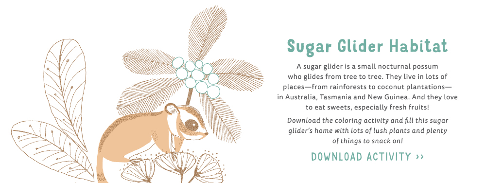 download activity to color in the sugar glider and habitat